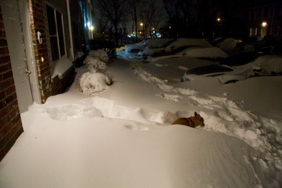 Stoli compared to the snow on Tuesday Night. (We got more snow after this photo) © Holly Hildreth 2011