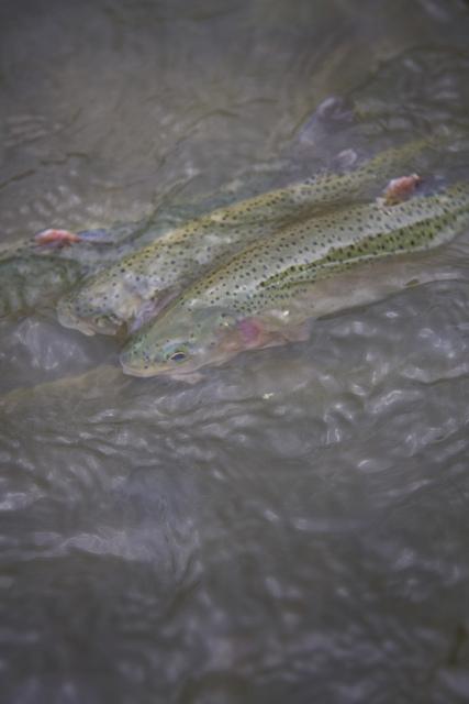 Iowa Fish Hatchery © Holly Hildreth 2011