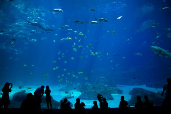 The World's Largest indoor aquarium © Holly Hildreth 2011