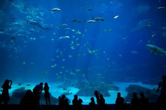 The World's Largest indoor aquarium © Holly Hildreth 2011