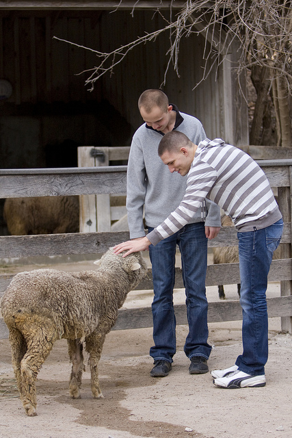 Daniel and Derek petting the sheep © Holly Hildreth 2012
