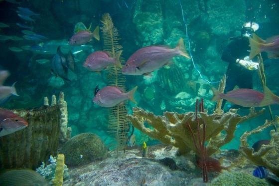Scuba Diver © Holly Hildreth 2012