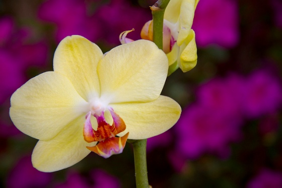 orchids © Holly Hildreth 2012