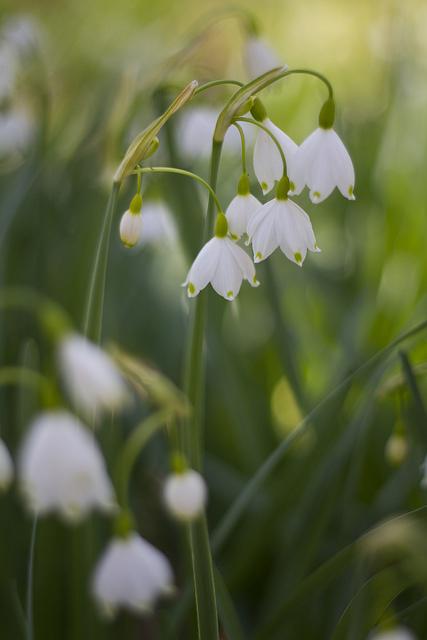 Flowers © Holly Hildreth 2012