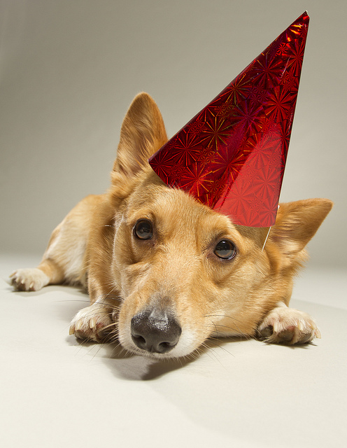 Stoli's unhappy birthday © Holly Hildreth 2012