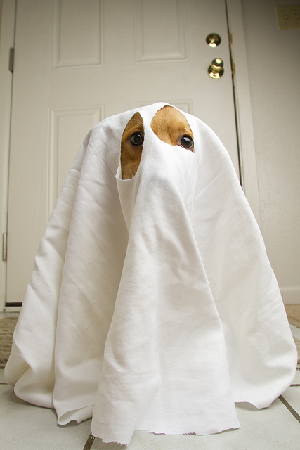 ghost costume, corgi