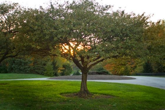 Sunset at Inniswood Metro Gardens, Westerville, Ohio