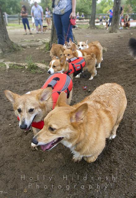 Stoli leading the pack