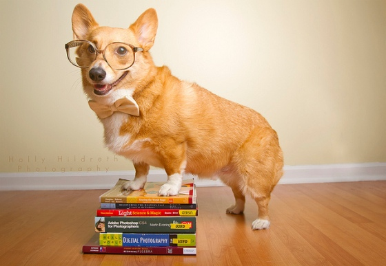 Columbus, Ohio pet photography by Holly Hildreth